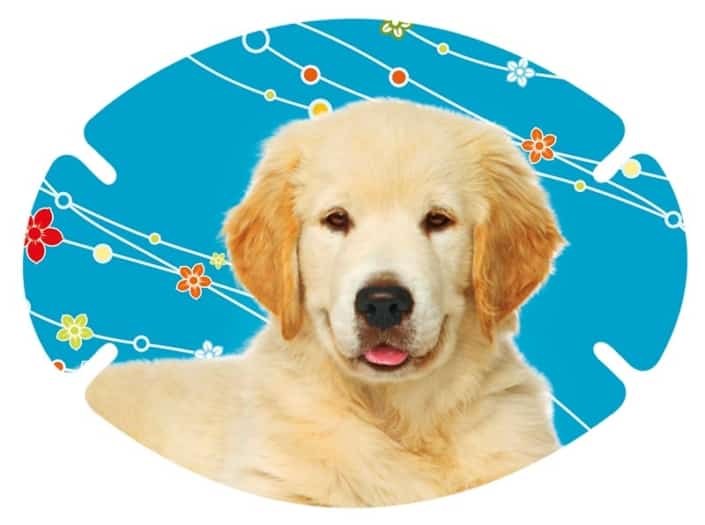 augenpflaster-motiv-hund