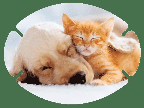 augenpflaster-mix-motiv-hund-katze