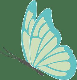 Piratoplast Schmetterlingskrankheit - Newsletter